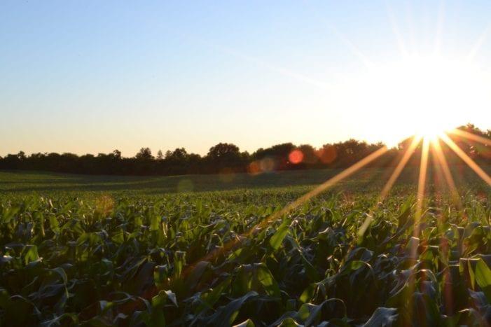 Plant health a decidedly human issue