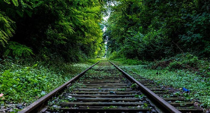 Researchers pinpoint where wildlife most likely to be killed by trains